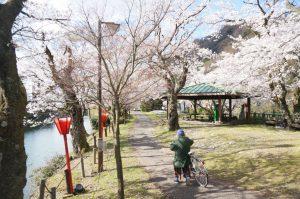 ミヤモト家具、SOLID、金沢、富山、家具、桜、インテリア